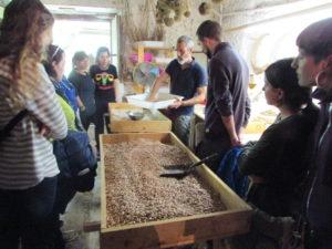 Producción de semillas ecológicas Aleka